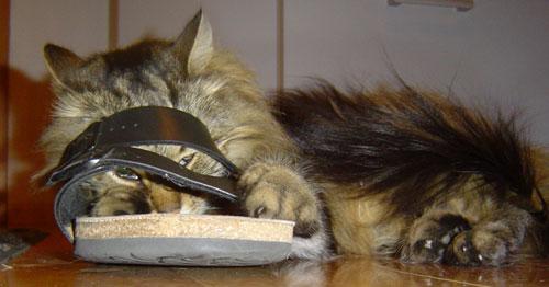 Kessy im Schuh