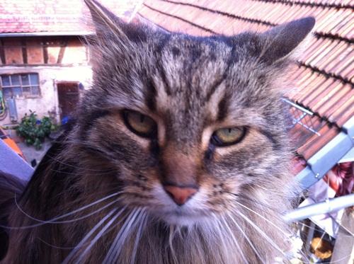 Kessy is not amused
