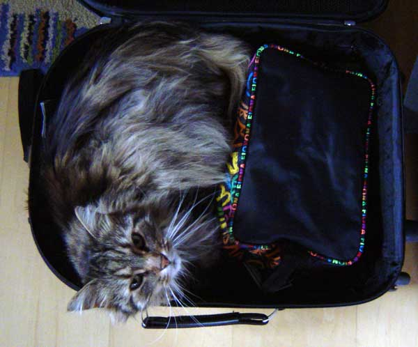 Kessy im Koffer