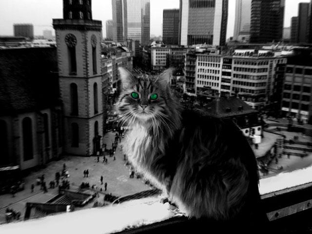 Kessy Frankfurt