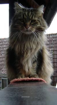 Kessy auf dem Balkon