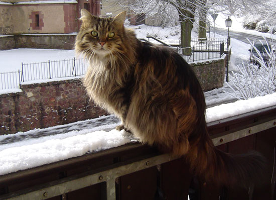 Kessy im Winter