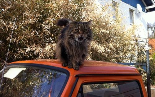 Kessy auf dem Auto