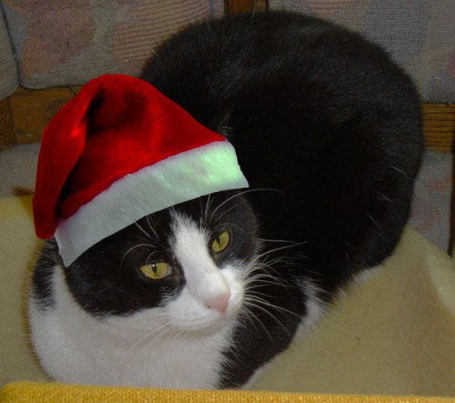 Felix mit Weihnachtsmütze