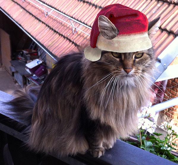Kessy mit Weihnachtsmütze