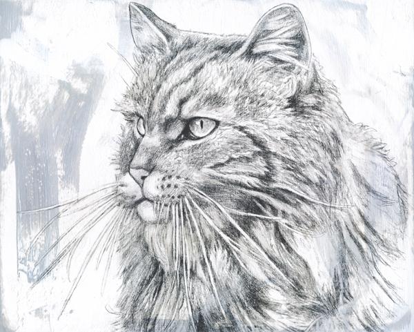 Porträt von Kessy
