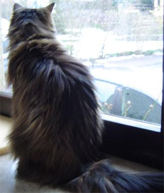 Kessy guckt zum Fenster raus