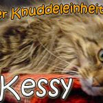 Kessy - Göttin der Knuddeleinheiten