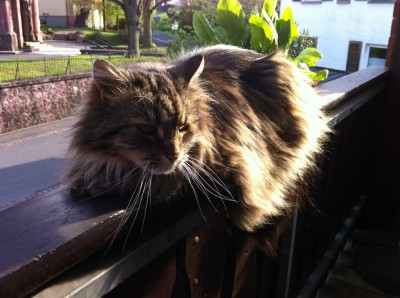 Gibt es etwas schöneres als in der Abendsonne auf dem Balkon zu liegen?