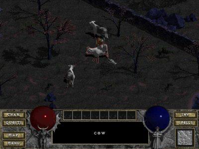 Die Diablo-Kühe