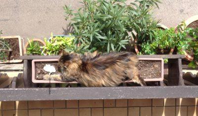 Andere pflanzen Pflanzen, wieder andere Katzen.