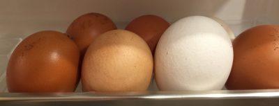 Eierschalen könnt ihr auch Essen